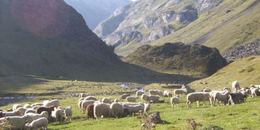 Hautes alpes qui sera le prochain pr sident de la - Chambre d agriculture des hautes alpes ...