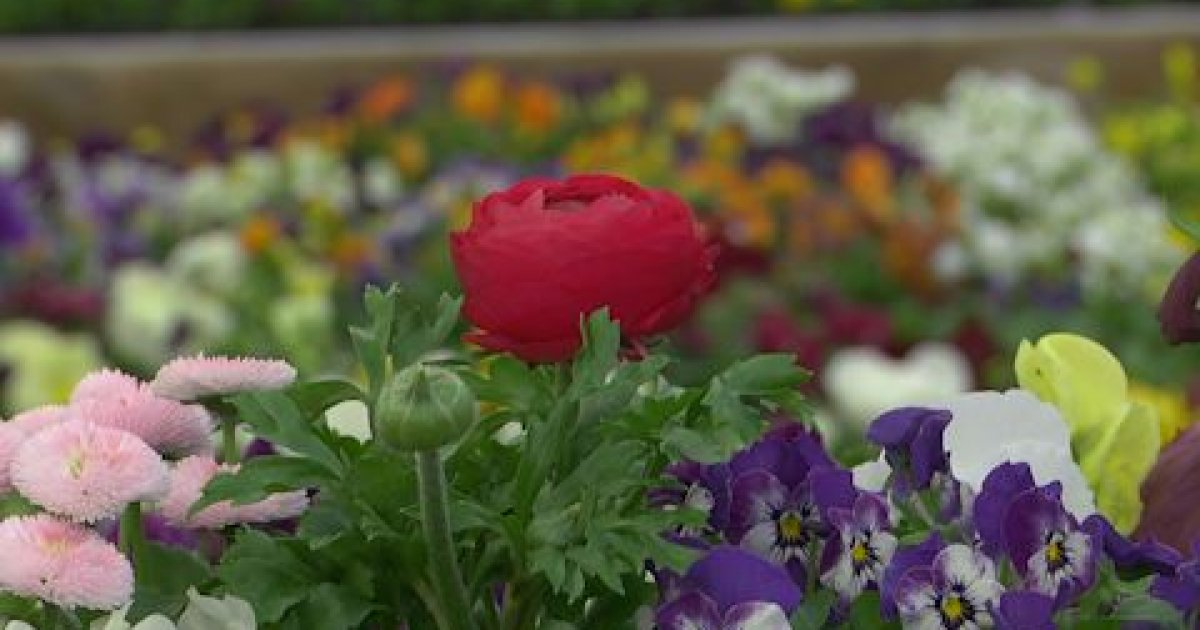 Alpes du sud quelques conseils d 39 un expert botanic pour for Avoir un beau jardin